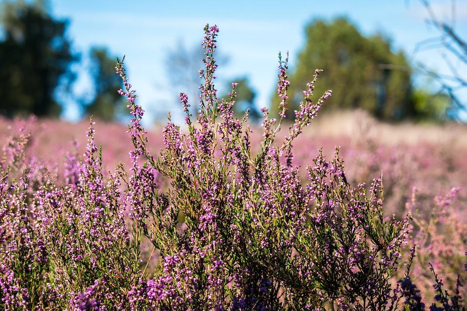 Heide-Natuurgrond