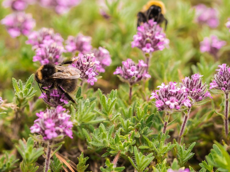 Bloemen-Kruiden-Bijen